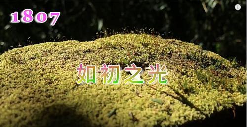 【新生命手語】2018年7月班歌 如初之光